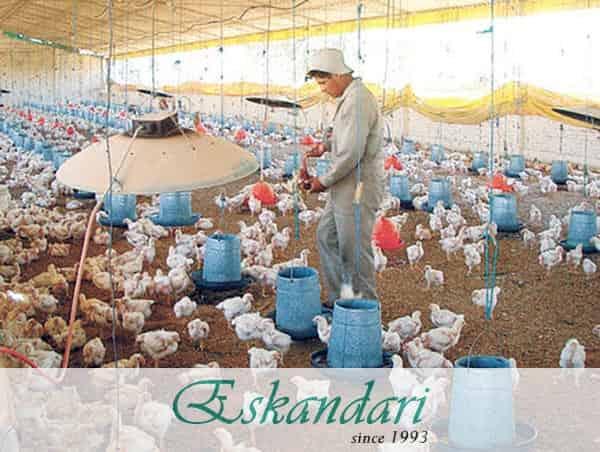 دما سالن پرورش مرغ